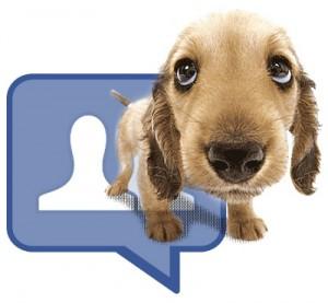 Facebook contro maltrattamenti animali