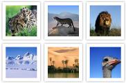 creare-miniature-immagini-e-foto-su-sito